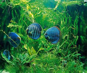 аллергия на аквариум симптомы